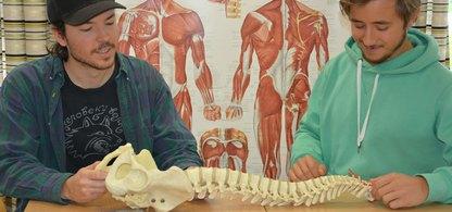 Två killar som studerar en skelettdel i ämnet anatomi och fysiologi.