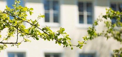 En gren med gröna blad på ifrån ett träd